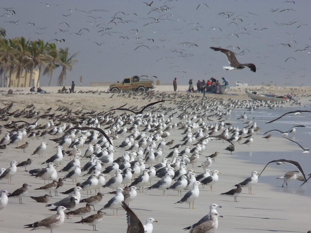 Südoman Dhofar / southern Oman Dhufar
