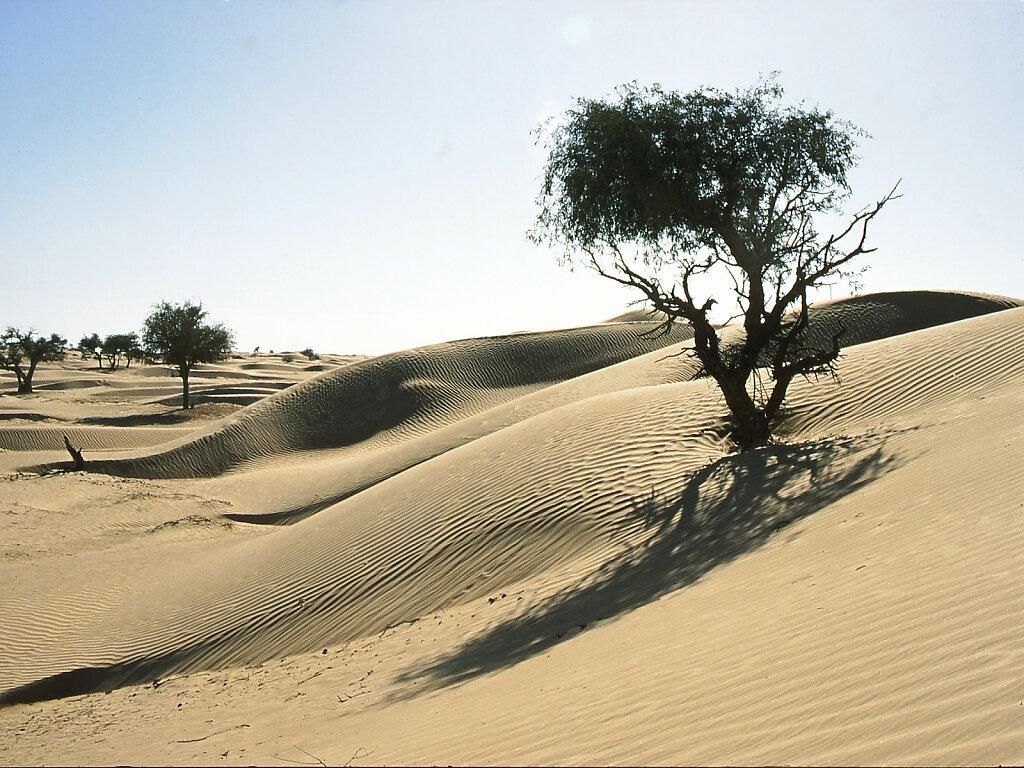 Ramlat al Wahiba / Ar Rimal ash Sharkiyya / bei Bilad Bu Ali / near Bilad Bu Ali