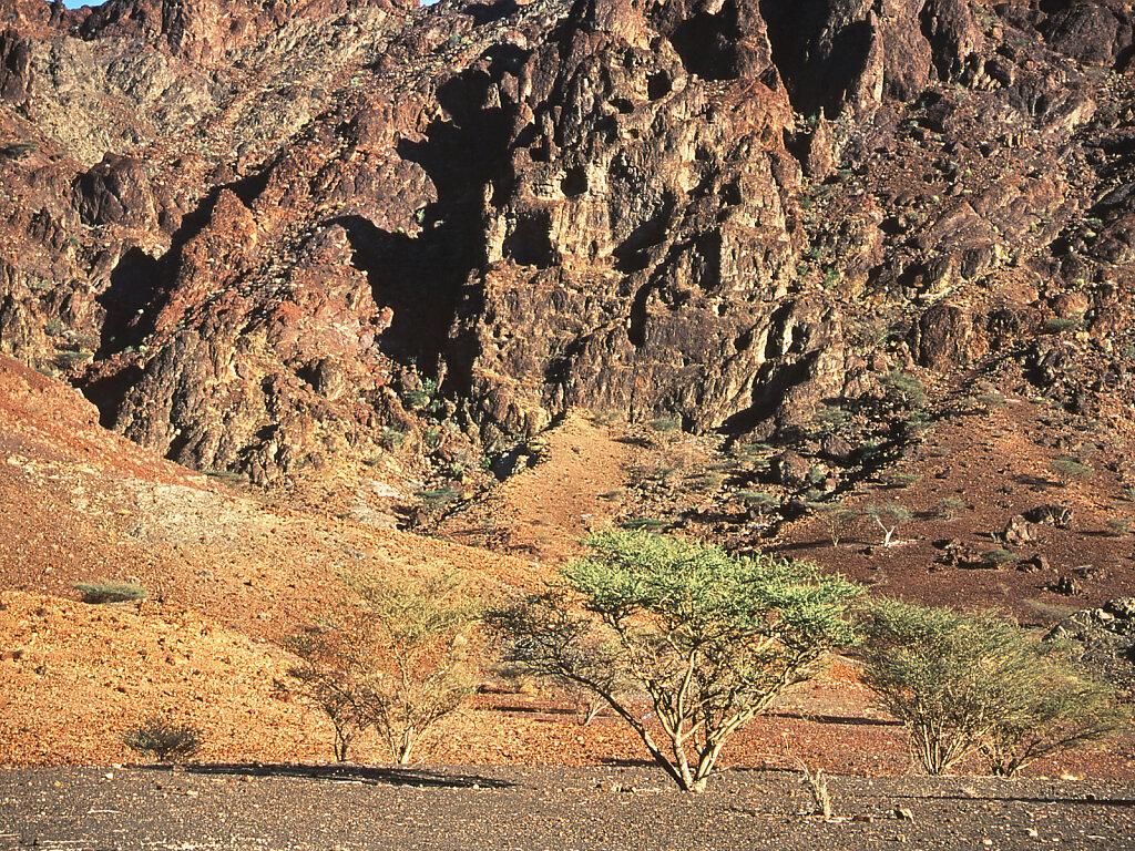 Wadi Al Tayin / Wadi Al Tayeen