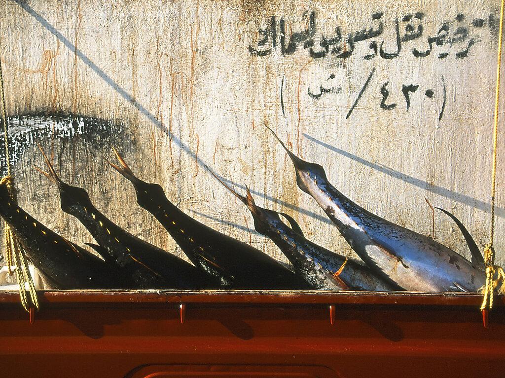 Fischerei / Fisheries