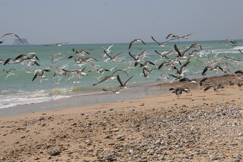Küsteneindrücke / Coastal Impressions