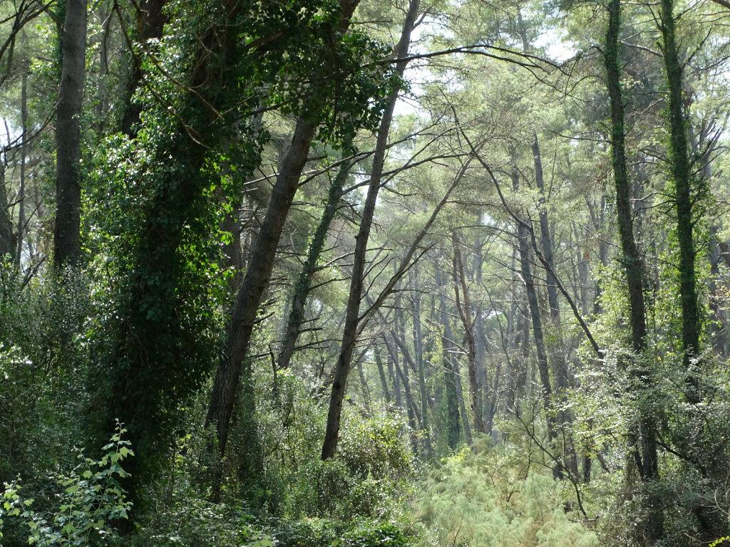 Divjake Nationalpark / National Park